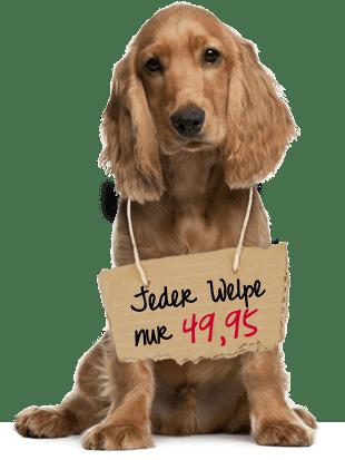 Checkliste Für Den Welpenkauf Wühltischwelpen Nein Danke